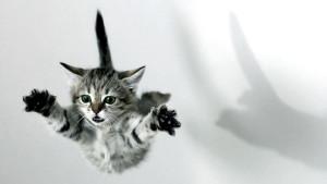 cat_jump_1600x900